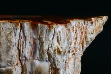 Cendrier en bois fossilisé en gros plan