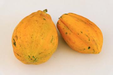 Deux papayes mûres sur fond blanc