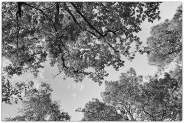 Feuillages d'arbres en contre-plongée - Noir et blanc