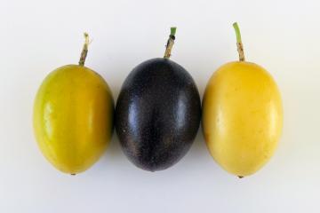 Trois fruits de la passion sur fond blanc