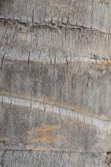 Texture - Stipe de cocotier