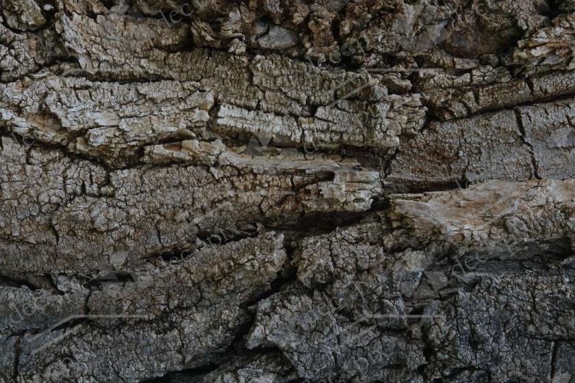 Texture - Ecorce d'arbre