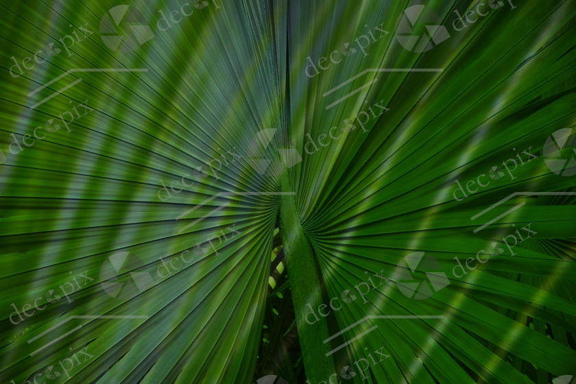 Feuillage de palmier - Surimpression et rayonnement