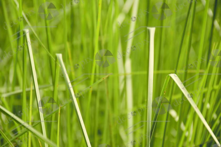 Arrière-plan végétal - Herbes vertes
