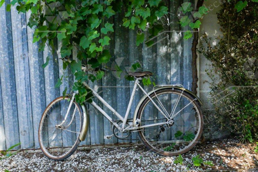 Le vélo sous la vigne