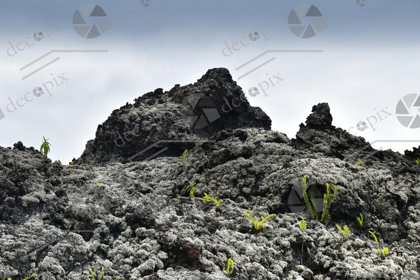 Paysage volcanique et renouveau végétal