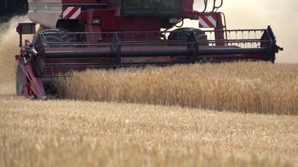 Moissonneuse-batteuse fauchant les blés - barre de coupe