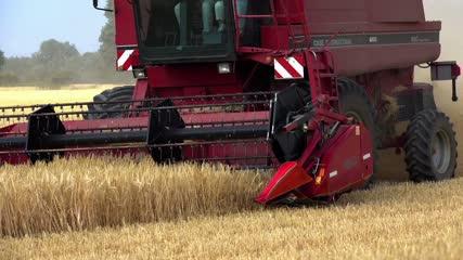 Moissonneuse-batteuse fauchant les blés