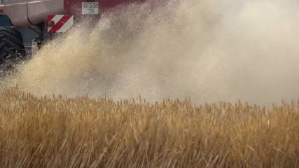 Vue arrière d'une moissonneuse-batteuse fauchant les blés et gros plan sur les rejets