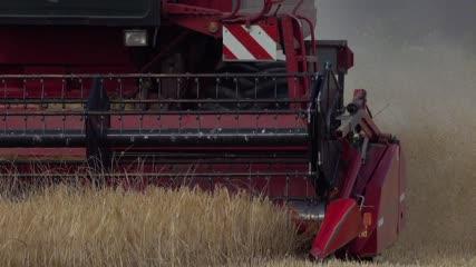 Fauchage des blés par une moissonneuse-batteuse